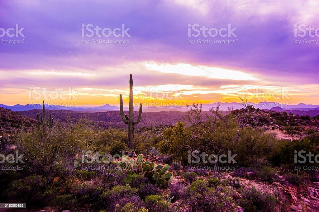 Arizona Purple Sunset with Saguaro stock photo