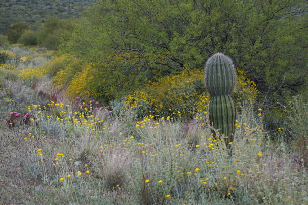 Arizona Roadways stock photo