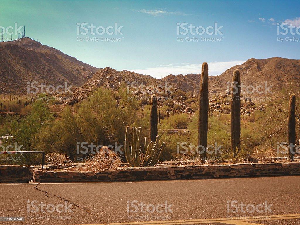 Arizona saguaro cactus national park royalty-free stock photo