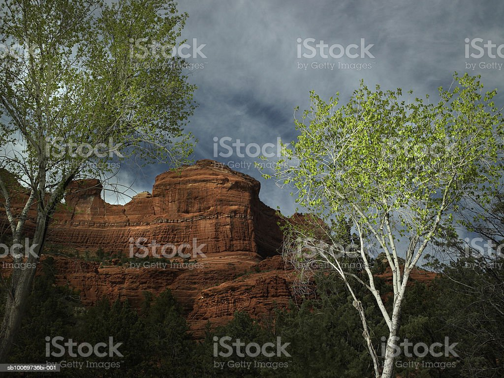 USA, Arizona, Sedona, Rock and tree at dusk 免版稅 stock photo