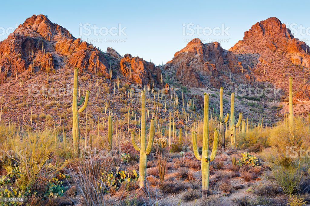 Arizona Sonoran Desert and Saguaro Cactus stock photo
