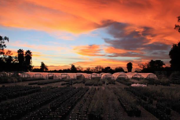 Arizona Sunset 2016 stock photo