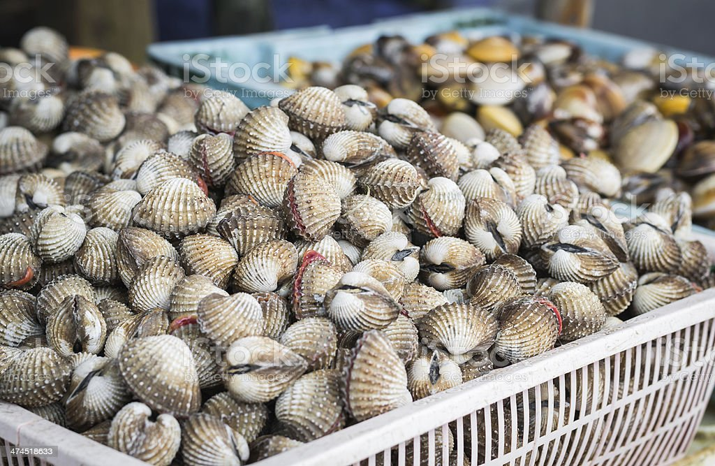 ark shell and sea mussle in baskets stock photo