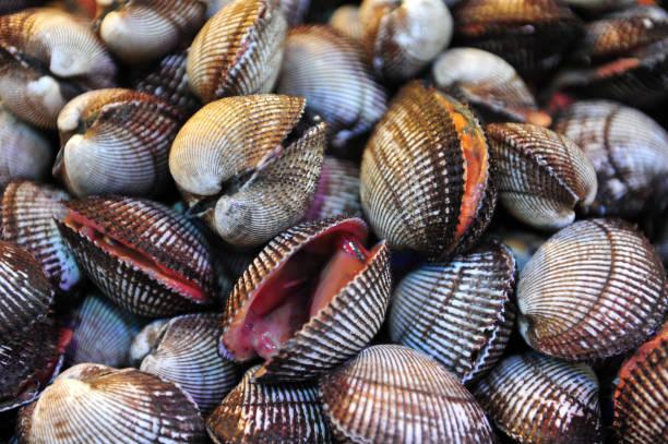 ark shell - herzmuschel stock-fotos und bilder
