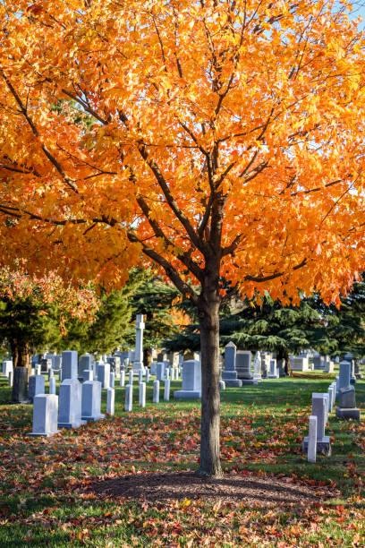 arlington national cemetery in autumn - memorial day weekend стоковые фото и изображения