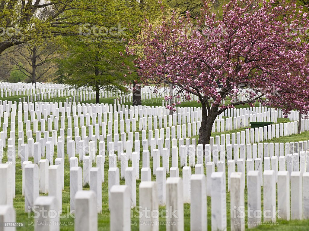 Arlington: Tombstone and Trees stock photo
