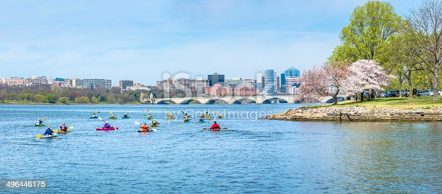 The skyline of Arlington, Virginia, looking north on the Potomac River during the peak of the cherry blossom season.  Kayakers make their way upstream on the river in multi-colored boats using double blade paddles.