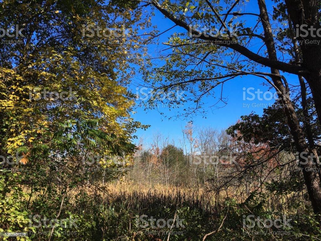 IMG_5824 Arlington's Great Meadow stock photo