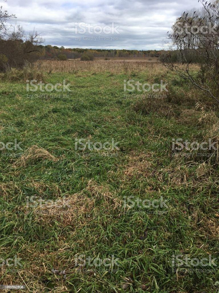 IMG_5894 Arlington's Great Meadow stock photo