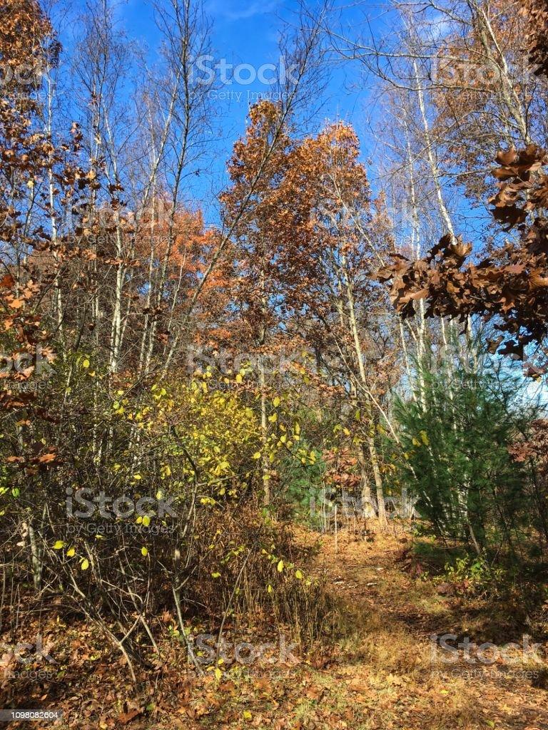 IMG_5960 Arlington's Great Meadow stock photo