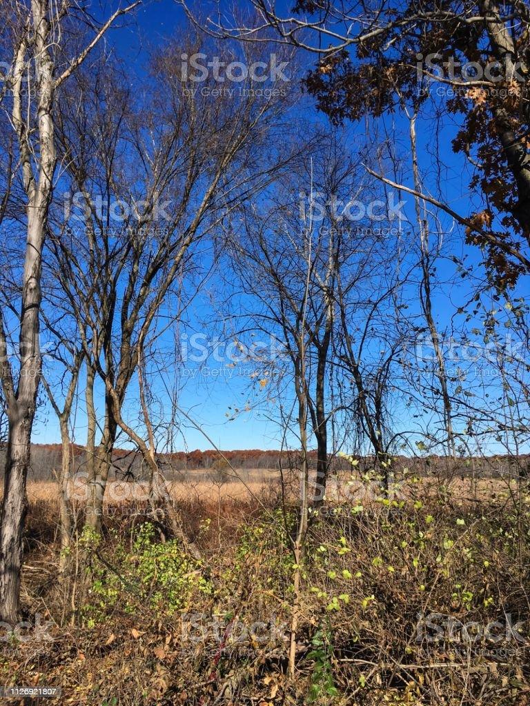 IMG_5955 Arlington's Great Meadow stock photo