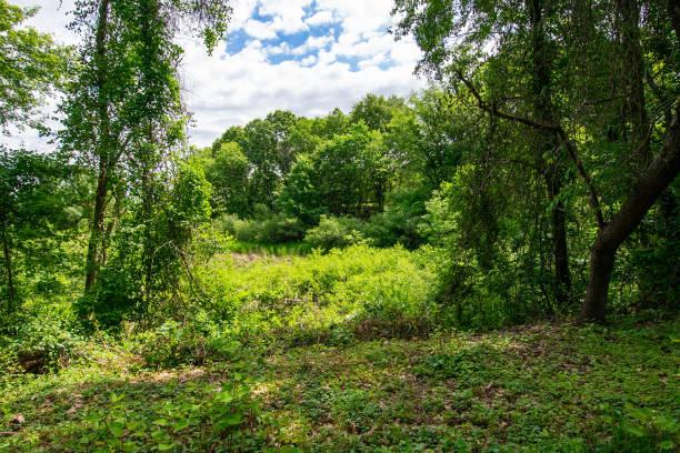 DSC_0637D3400 Arlington's Great Meadow stock photo