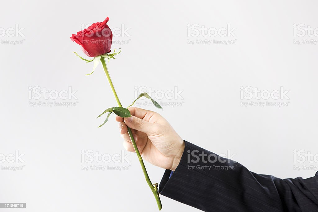 Arm of Man Holding Single Rose on Gray, Copy Space stock photo