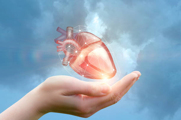 arm supports the heart. - human heart stock photos and pictures