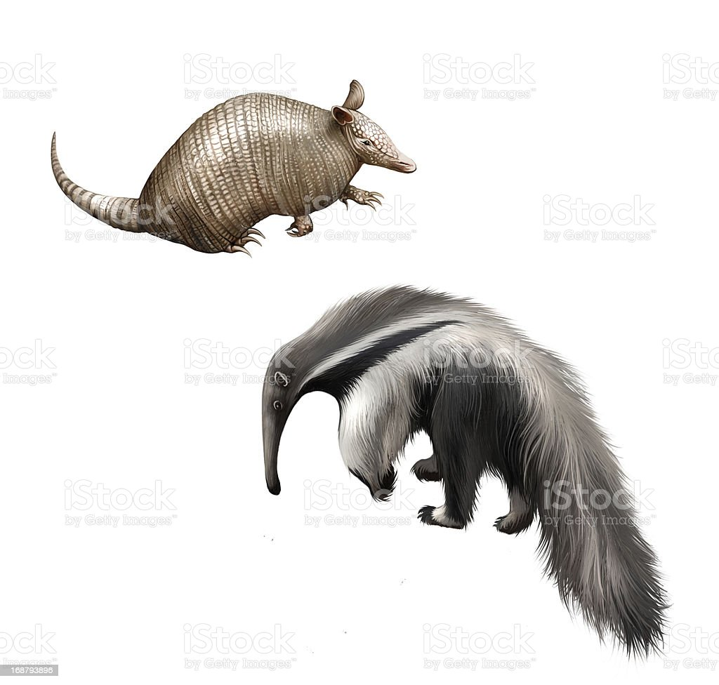 Armadillo and Giant anteater Isolated illustration on white background. stock photo