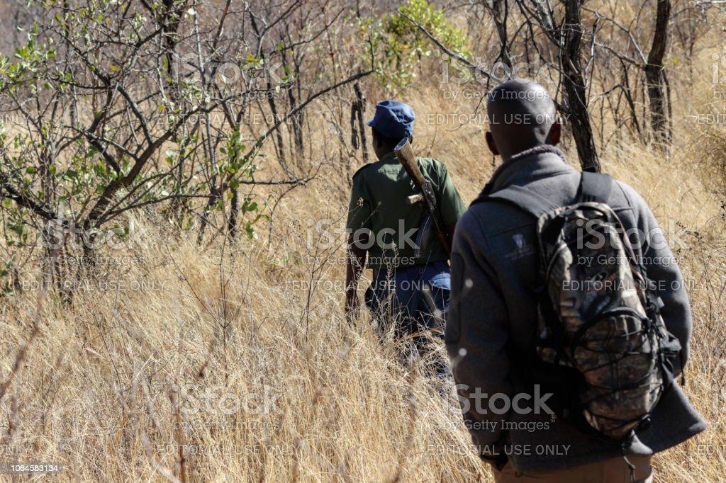Armed game guard trekking through Matobo National Park stock photo