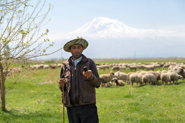 Armenian shepherd looking at his cell phone, Vagarshapat, Armenia. Vagarshapat, Armenia - April 28, 2017: Armenian shepherd looking at his cell phone, with sheep and Mt Ararat in the background, in Vagarshapat, Armenia. armenia country stock pictures, royalty-free photos & images