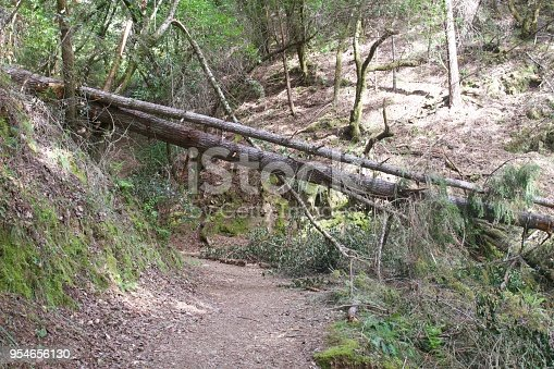 Armstrong Redwoods State Natural Reserve, California,  United States - to preserve 805 acres (326 ha) of coast redwoods (Sequoia sempervirens). The reserve is located in Sonoma County, Guerneville.