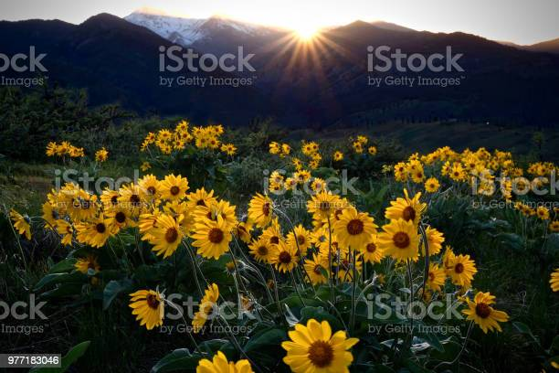 Photo of Arnica meadows at sunrise.