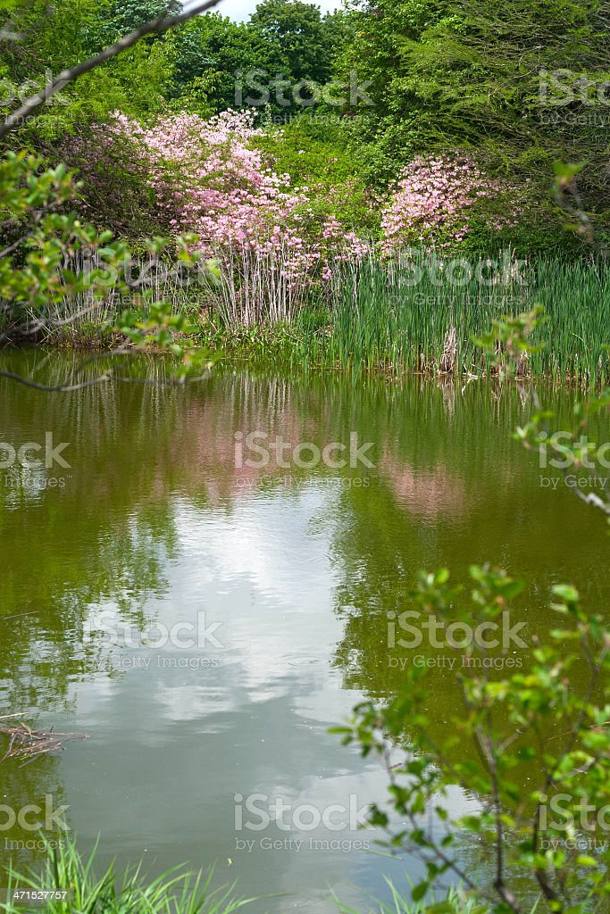 Arnold Arboretum stock photo