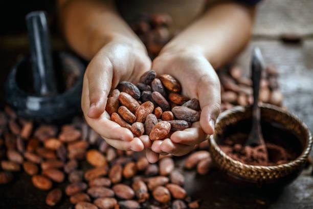Aromatic cocoa beans stock photo