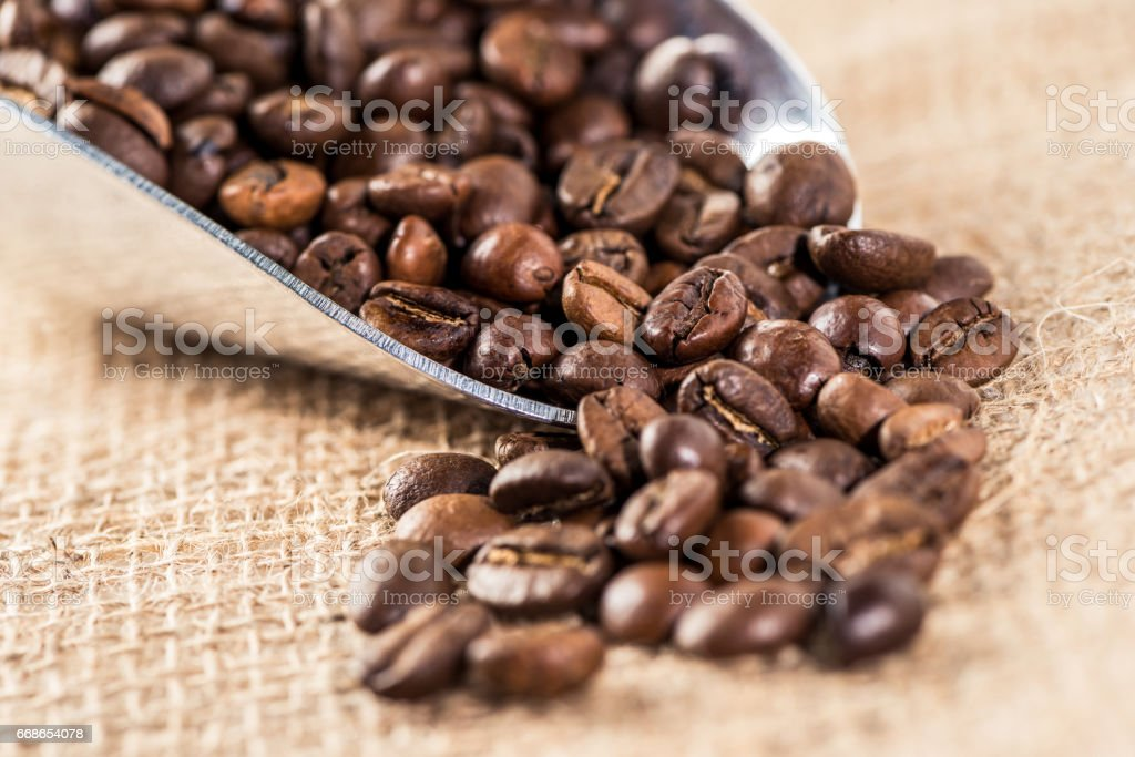 Aromatic coffee beans scattered of metallic scoop on sacking surface stock photo