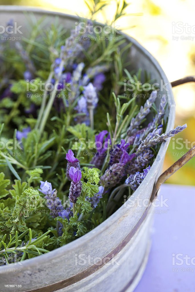 Aromatic herbs in galvanic pail. royalty-free stock photo