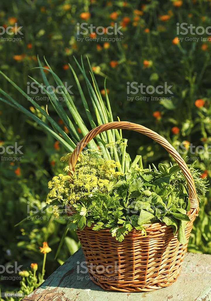 Aromatic herbs in garden royalty-free stock photo