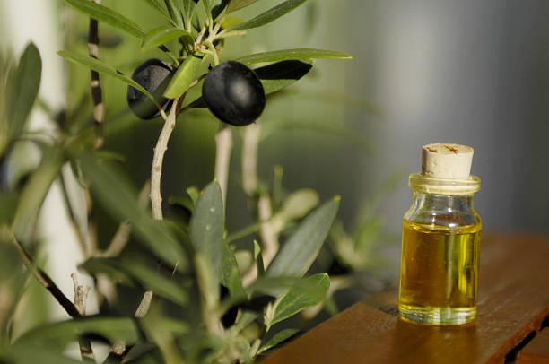 olio di oliva aromatico - ramoscello d'ulivo foto e immagini stock