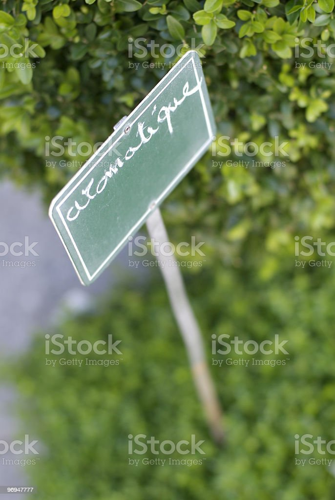 Aromatic plant royalty-free stock photo