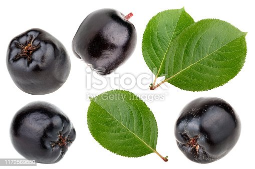 istock Aronia melanocarpa with leaves isolated on white background 1172569850