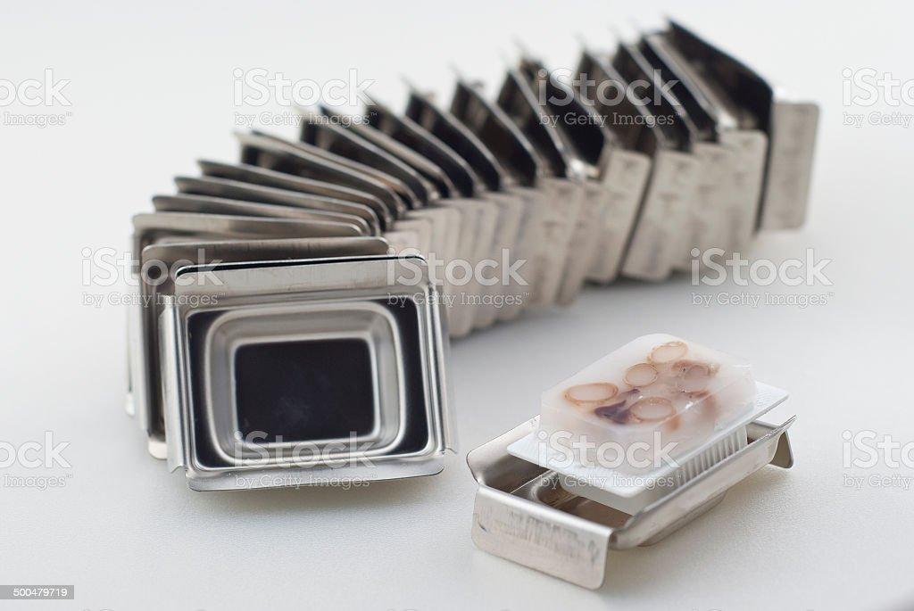 arranged histology metal mold with tissue block stock photo