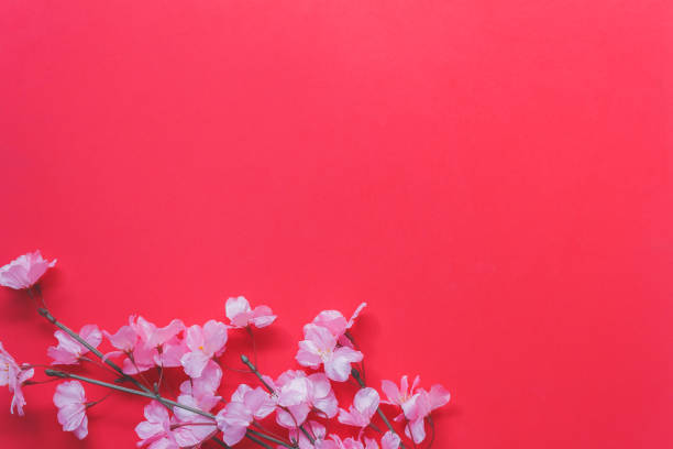 arrangement decoration chinese new year & lunar festival concept background.beautiful pink blossom on modern red wood wallpaper at home office desk.free space for creative design text and wording. - sakura background stock photos and pictures