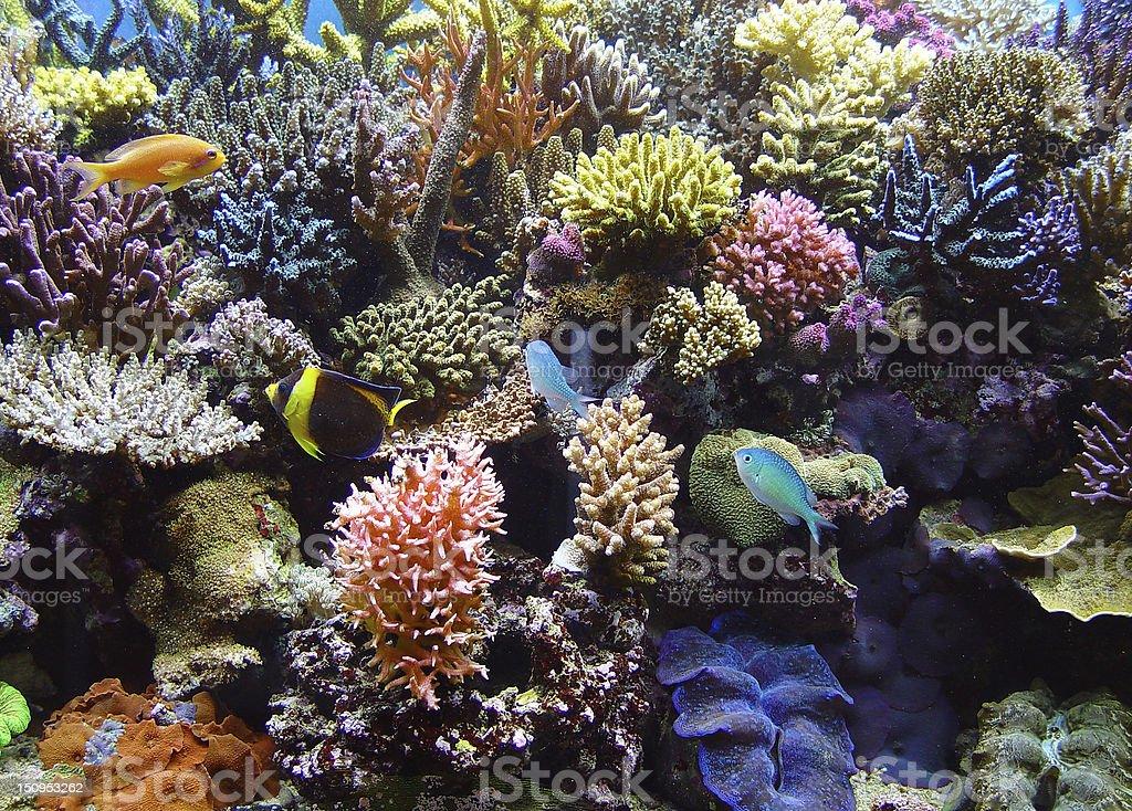 Arrangement of aquarium reef corals stock photo