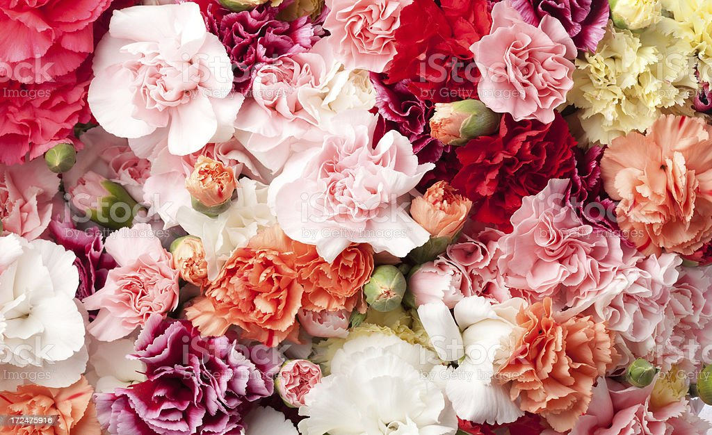 Arrangement of carnations in multicolors royalty-free stock photo