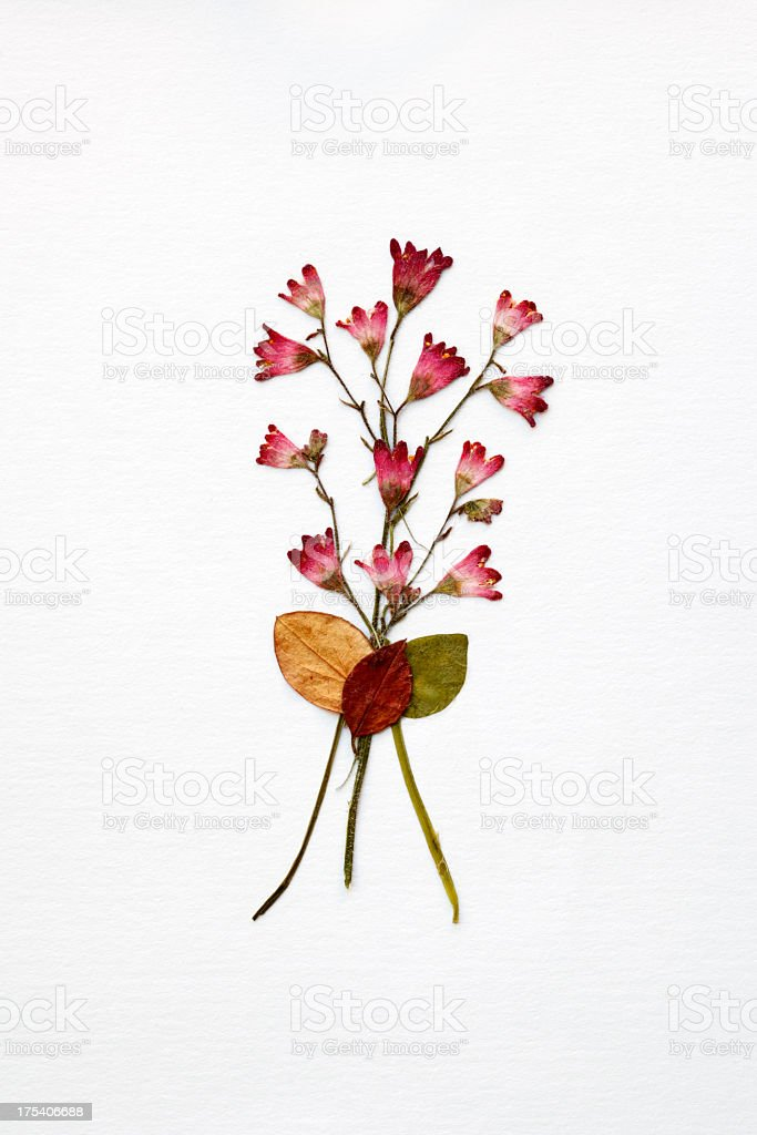 Arrangement of dried flowers and leaves on white background stock photo