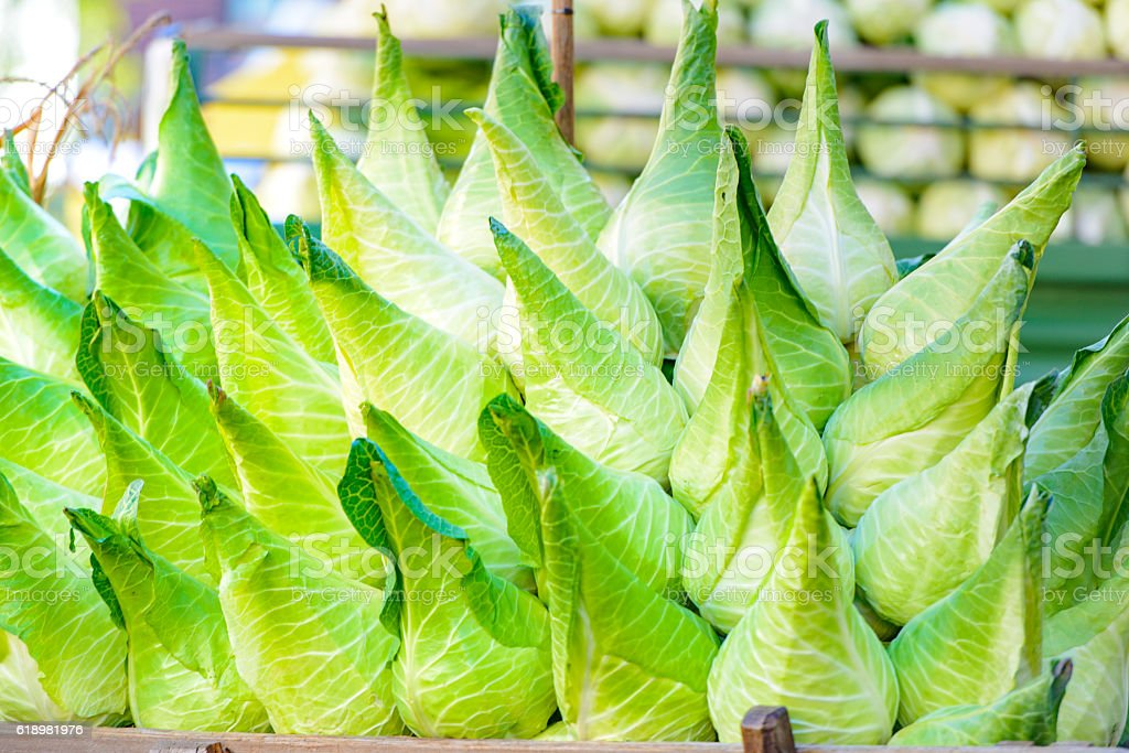 Arrangement of fresh pointed or sweetheart cabbage stock photo