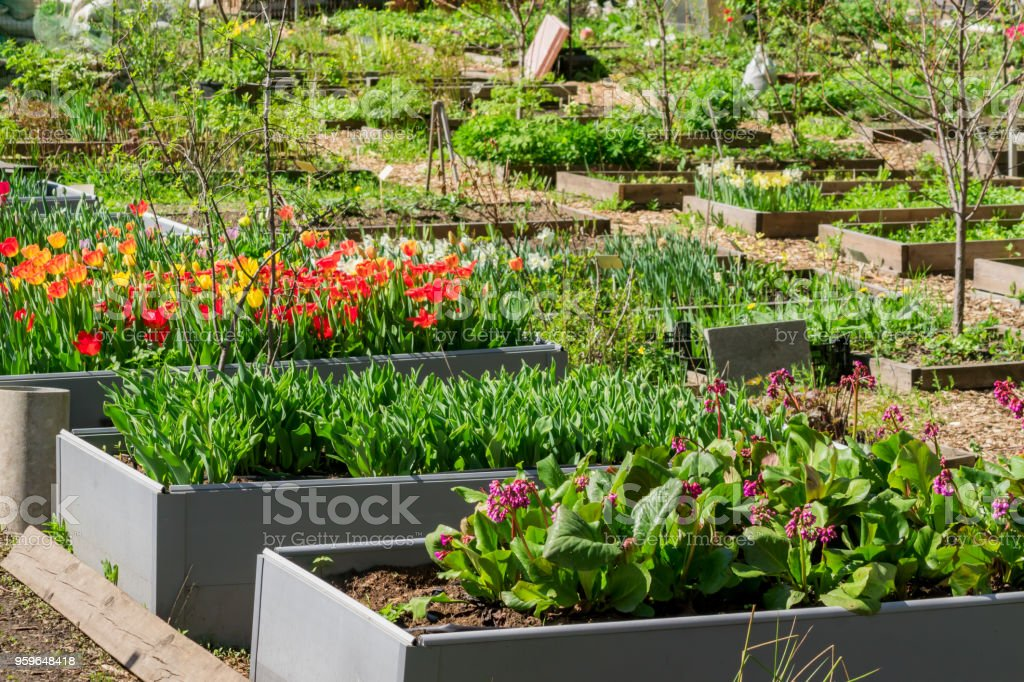 Awesome Arrangement Of Plants And Flowers In Garden Beds Outdoors, Rustic Country  Style   Stock Image .