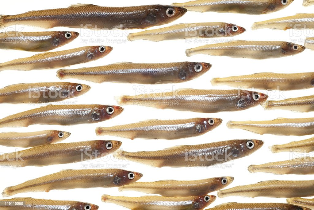 Arrangement of small fish (smelts) stock photo