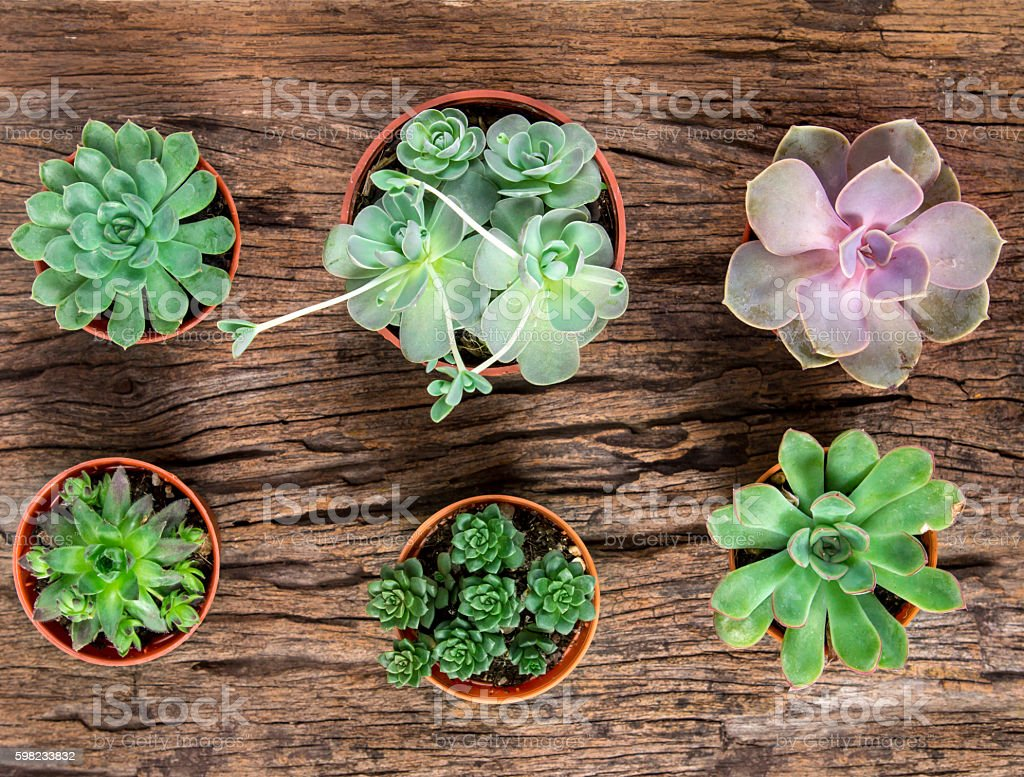 arrangement of succulents or cactus on wooden background foto royalty-free