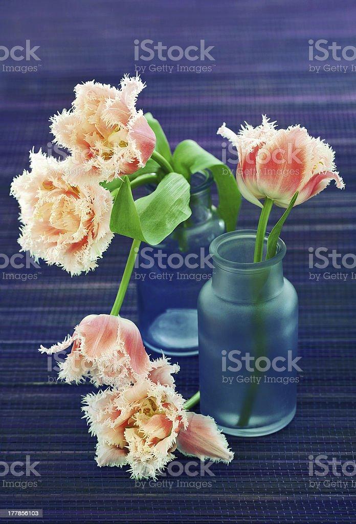 arrangement of tulips royalty-free stock photo