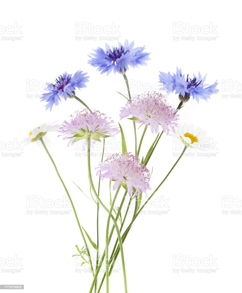 Arrangement of wildflowers isolated on white background stock photo