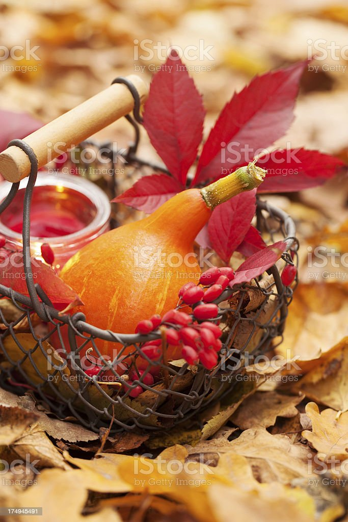 Arrangement with pumpkins and autumn leaves royalty-free stock photo