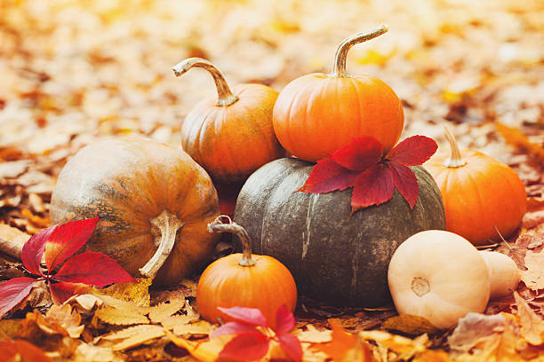 Arrangement with pumpkins and autumn leaves stock photo