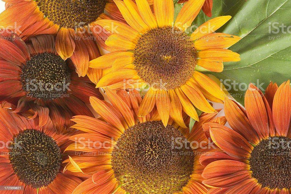 Arrangment -Harvest-3 royalty-free stock photo