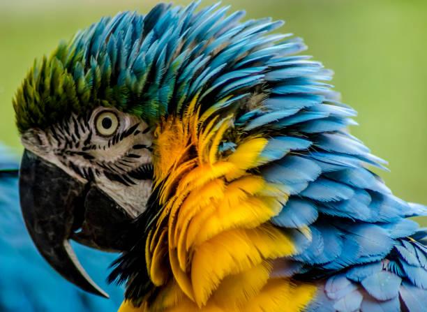 Arrepio Arrepio das belas plumagens goosebumps stock pictures, royalty-free photos & images