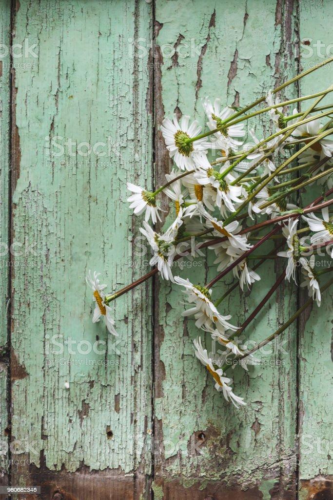 Arrière Plan Fleurs de Marguerite sur Fond Bleu stock photo