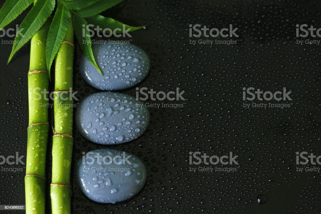 arrière plan noir avec branche de Bambou avec du feuillage sur la gauche et galets zen gris avec gouttes d'eau stock photo