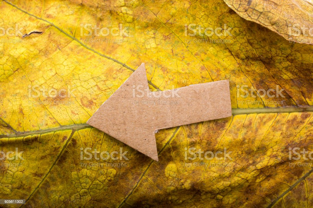 Arrow cut out of brown paper on leaf stock photo