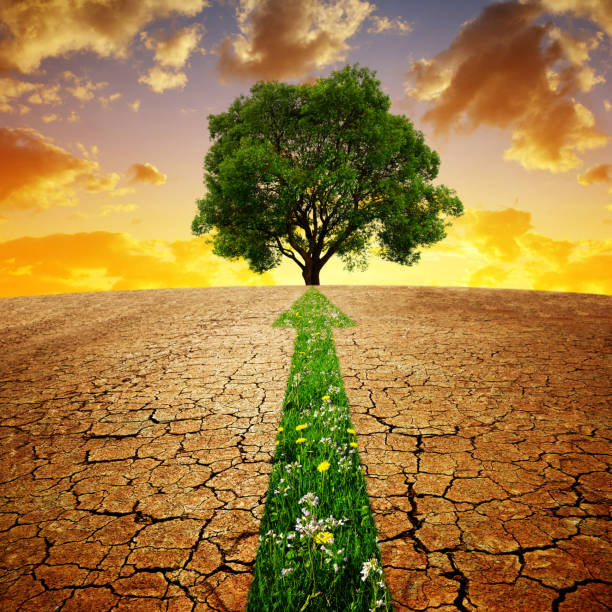 Arrow from green grass through dry country with cracked soil. stock photo